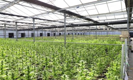 Tilray, Aphria Combine to Create Biggest Cannabis Company