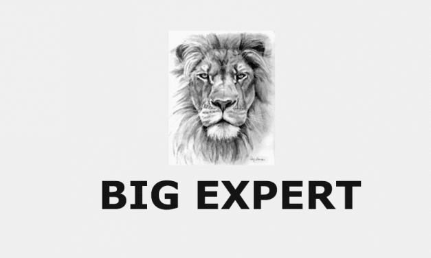 Big Expert: Everything You Need to Know