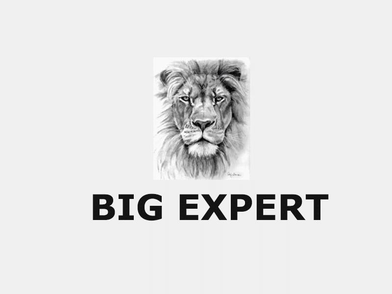 Big Expert Review: Everything You Need to Know