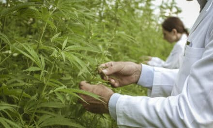 Drug Enforcement Agency Wants to Boost Marijuana Production for Research